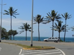 Promenades and palm trees